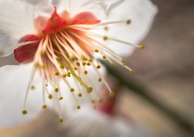 ◆5年公開模試(第3回)に向けて;花見もそこそこに(T_T)