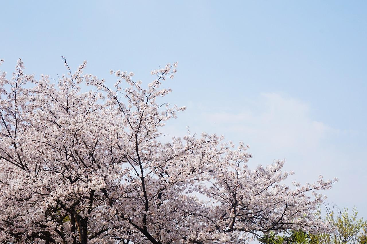 ★小6_育テ結果(5回3/25)|八分咲き(^^;)